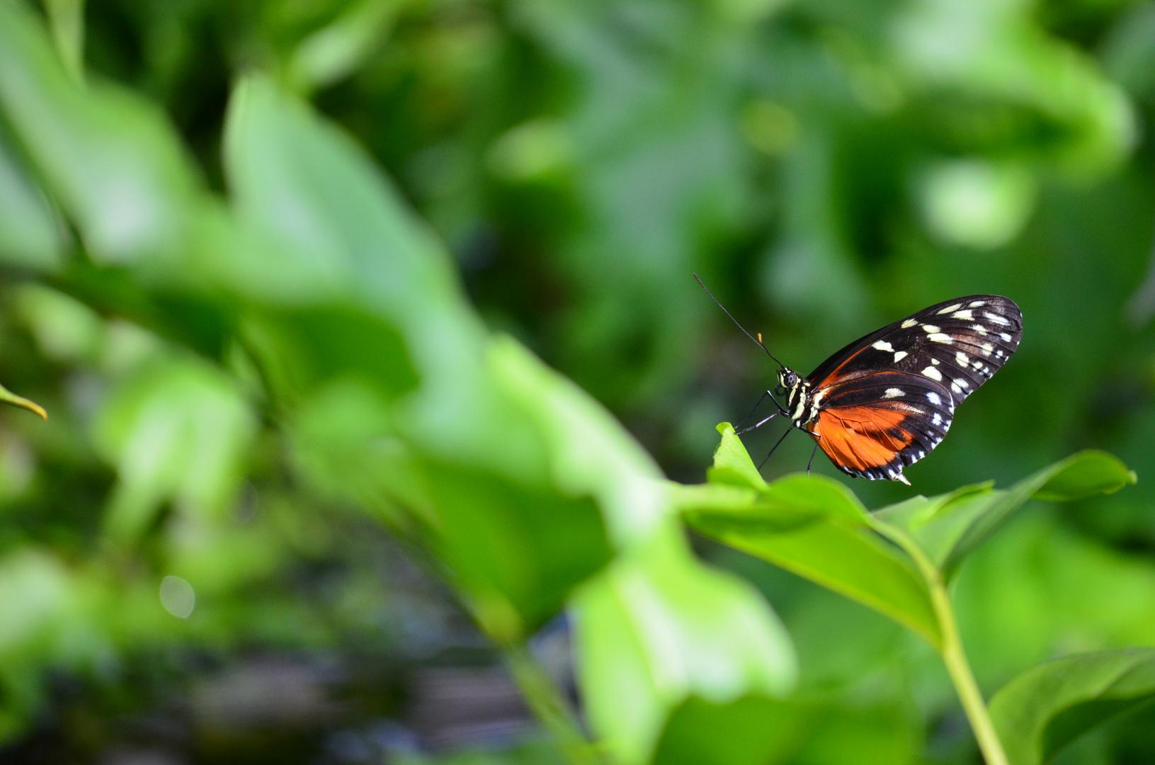 Bunter Schmetterling auf Blatt