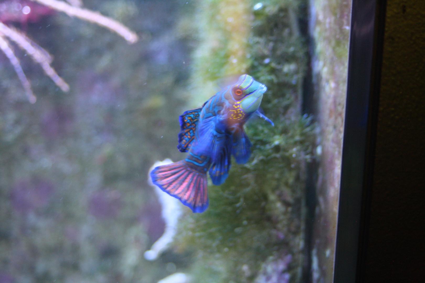 bunter schöner Fisch !!!