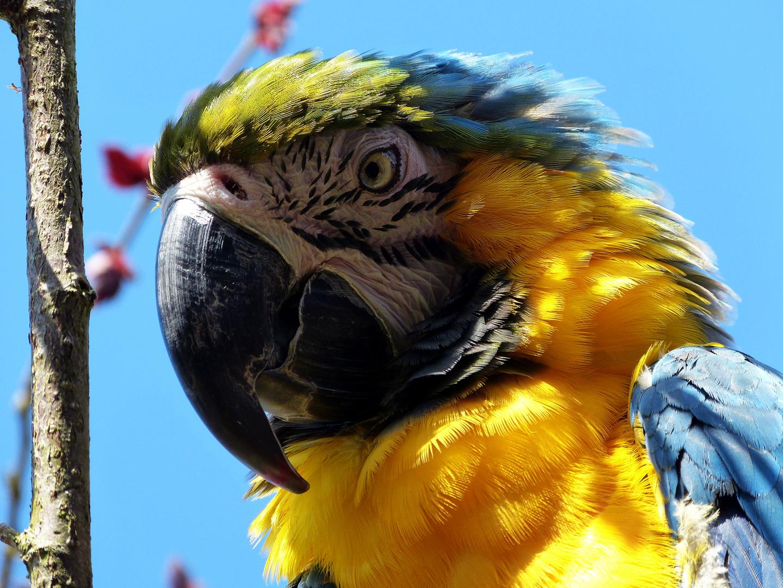 """bunter Vogel"""