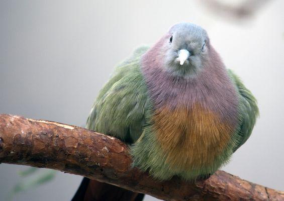 bunter vogel......