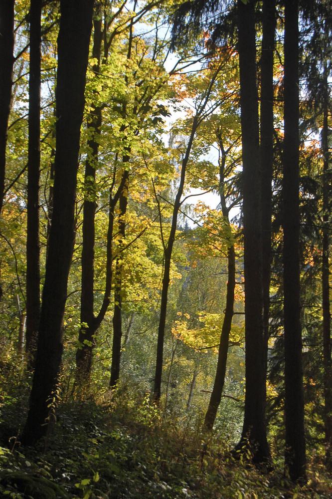 Bunter Wald 1
