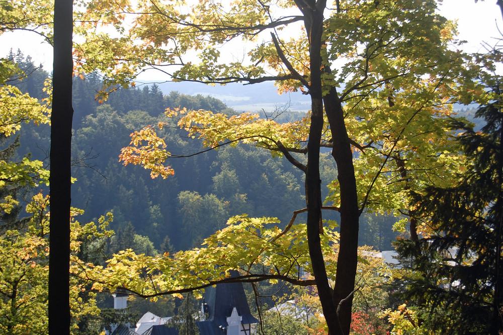 Bunter Wald 2