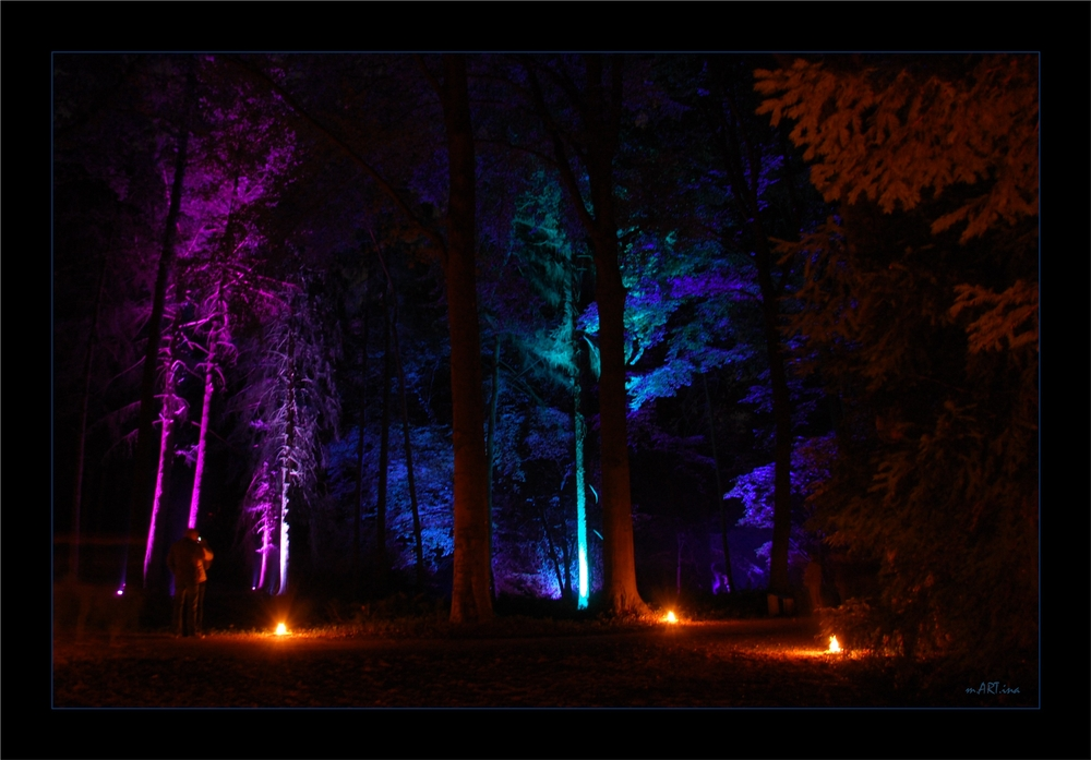 Bunter Wald....