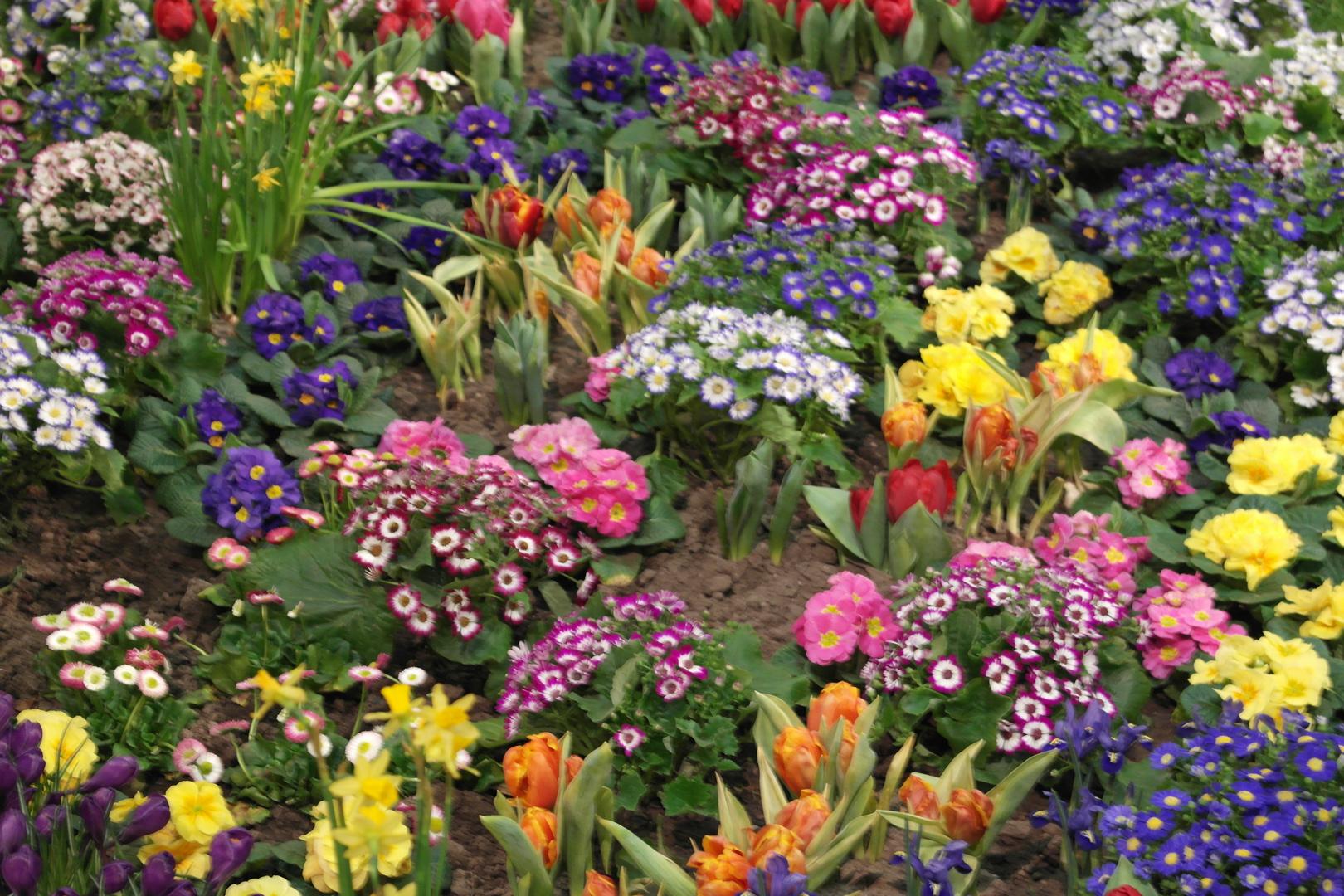Buntes Blumenmeer