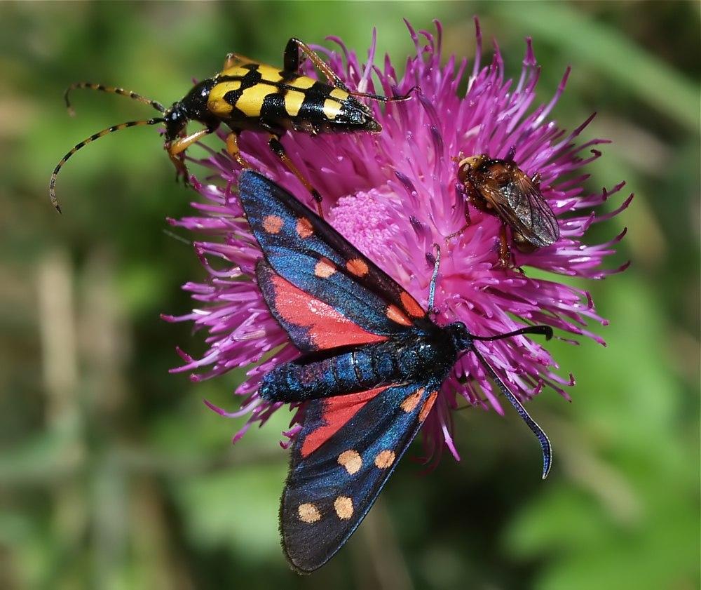 Buntes Insektentreiben