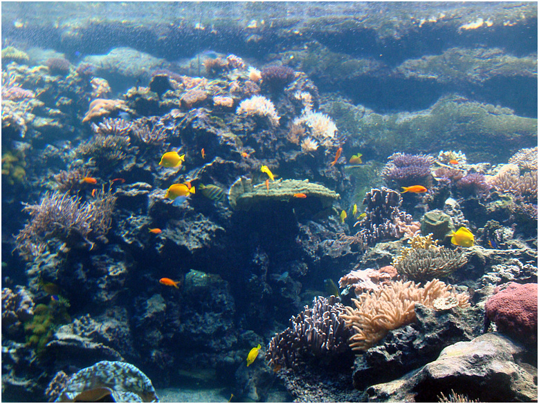 Buntes Leben unter Wasser