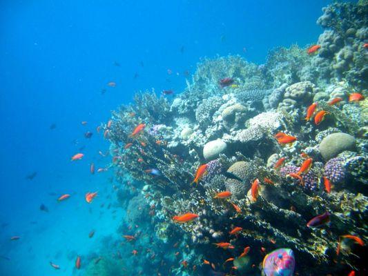 Buntes Treiben im Riff