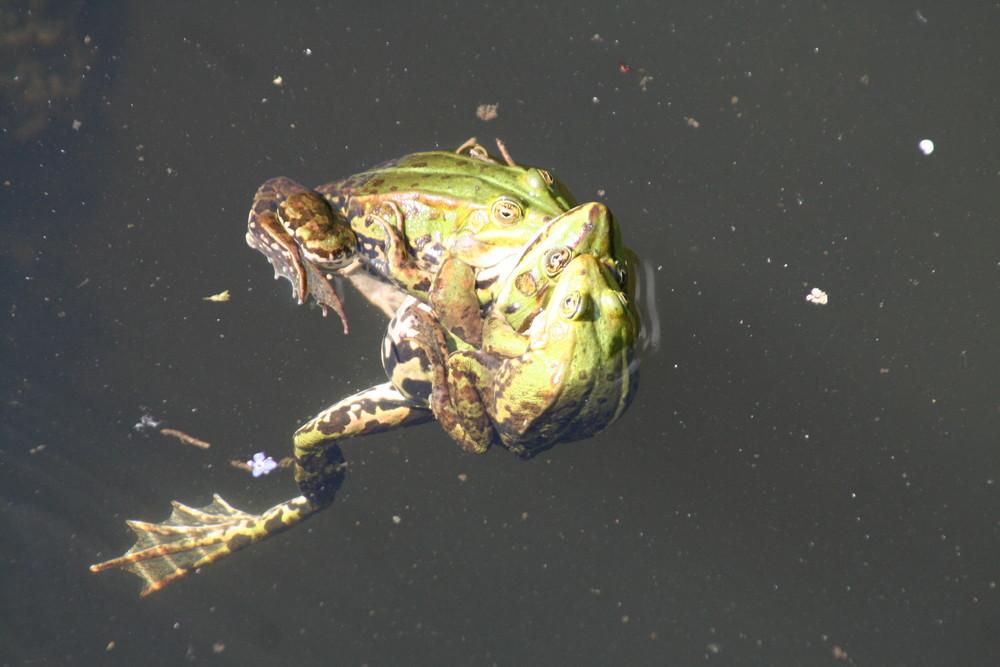 buntes Treiben im Teich
