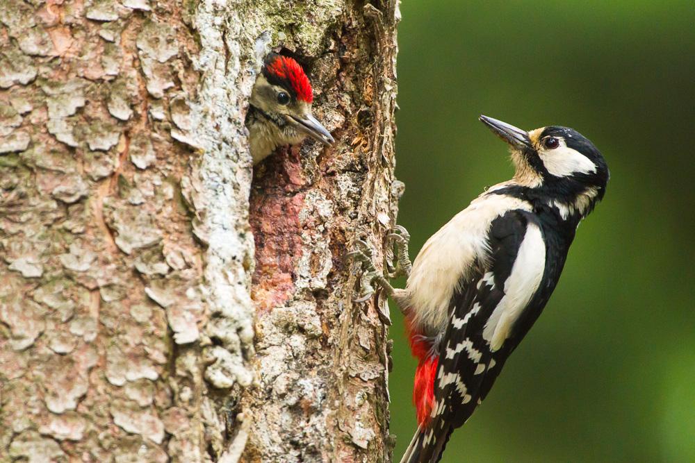 Baby Vogel Füttern