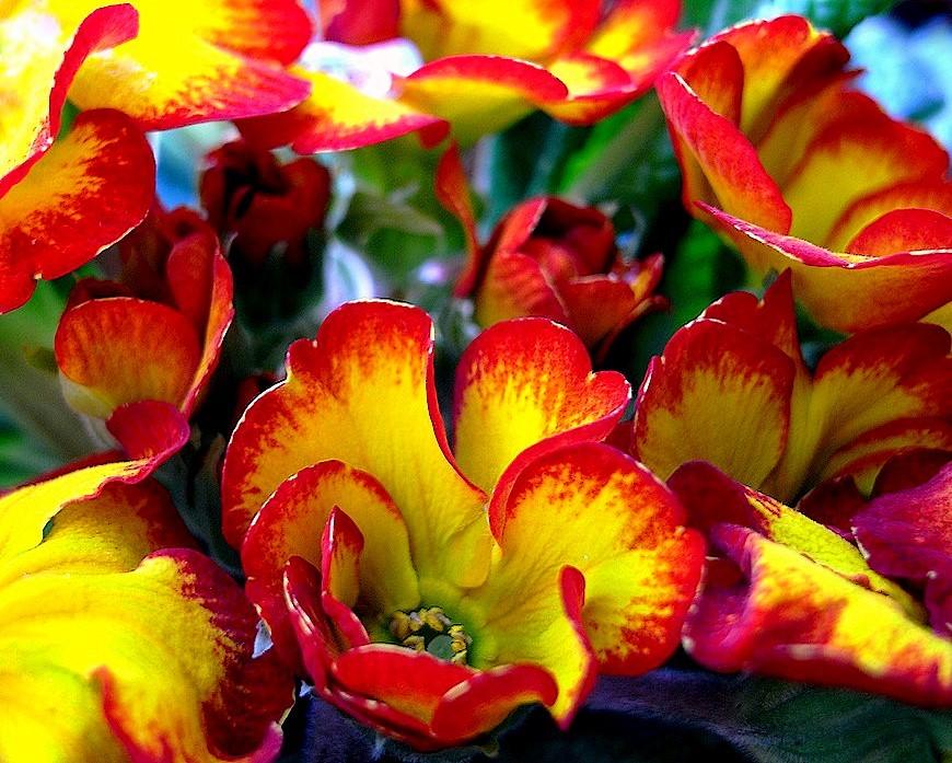 Buongiorno primavera foto immagini macro e close for Foto immagini buongiorno