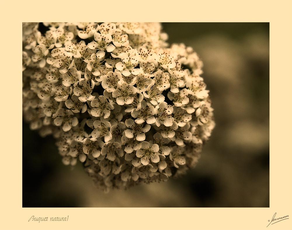 Buquet natural