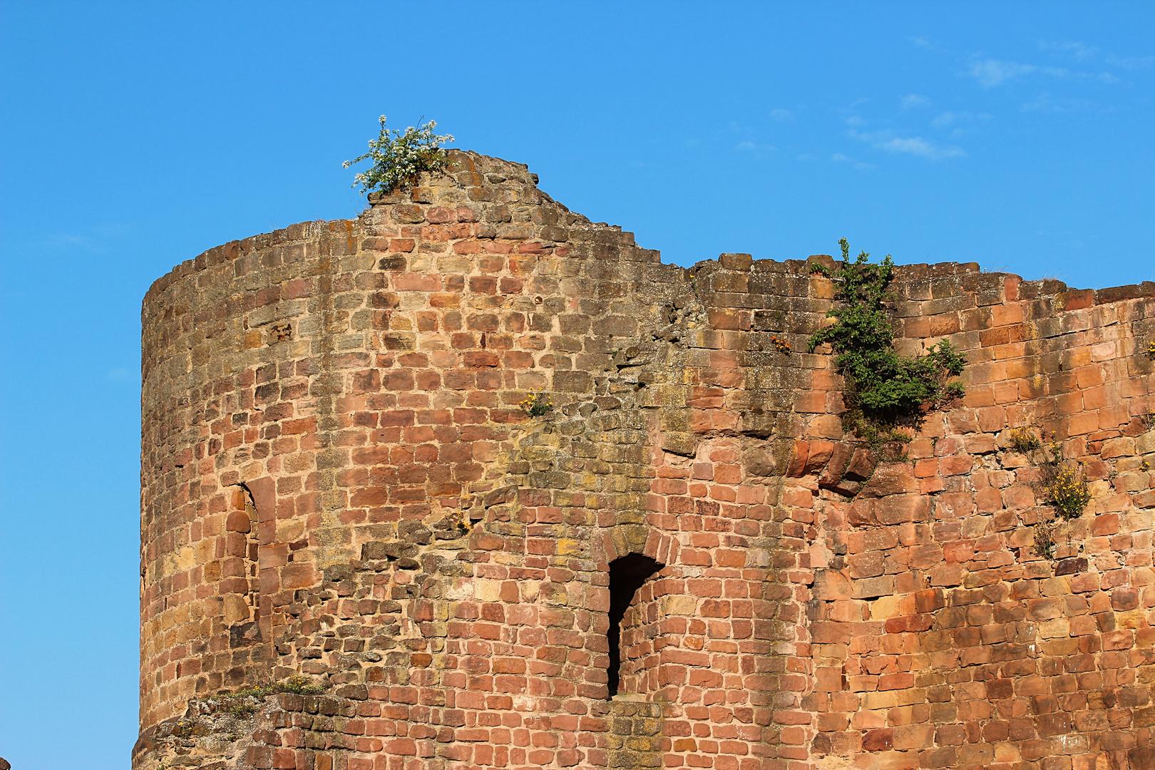 Burg Neuleinigen in der Pfalz (Detailansicht)