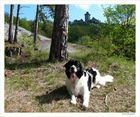 Burgblick zur Wachsenburg - Drei Gleichen