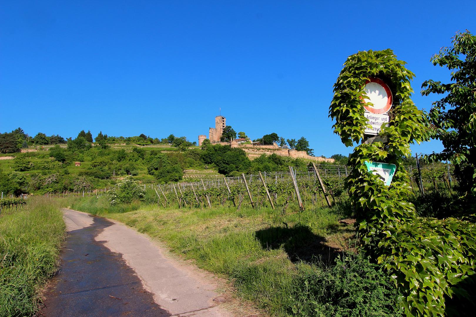 Burgenlandschaft bei Wachenheim