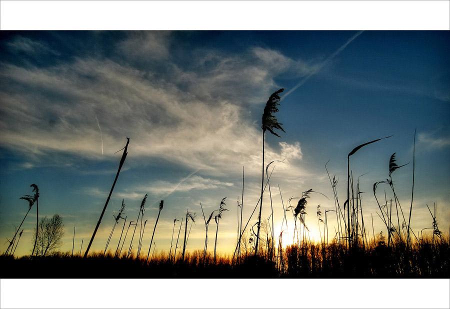 Burned reed