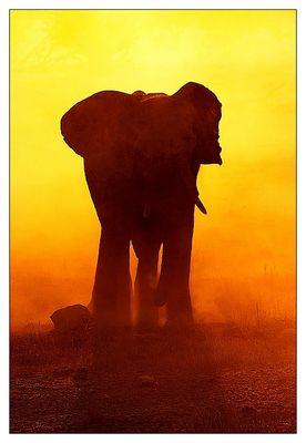 Burning Elephant - reloaded -