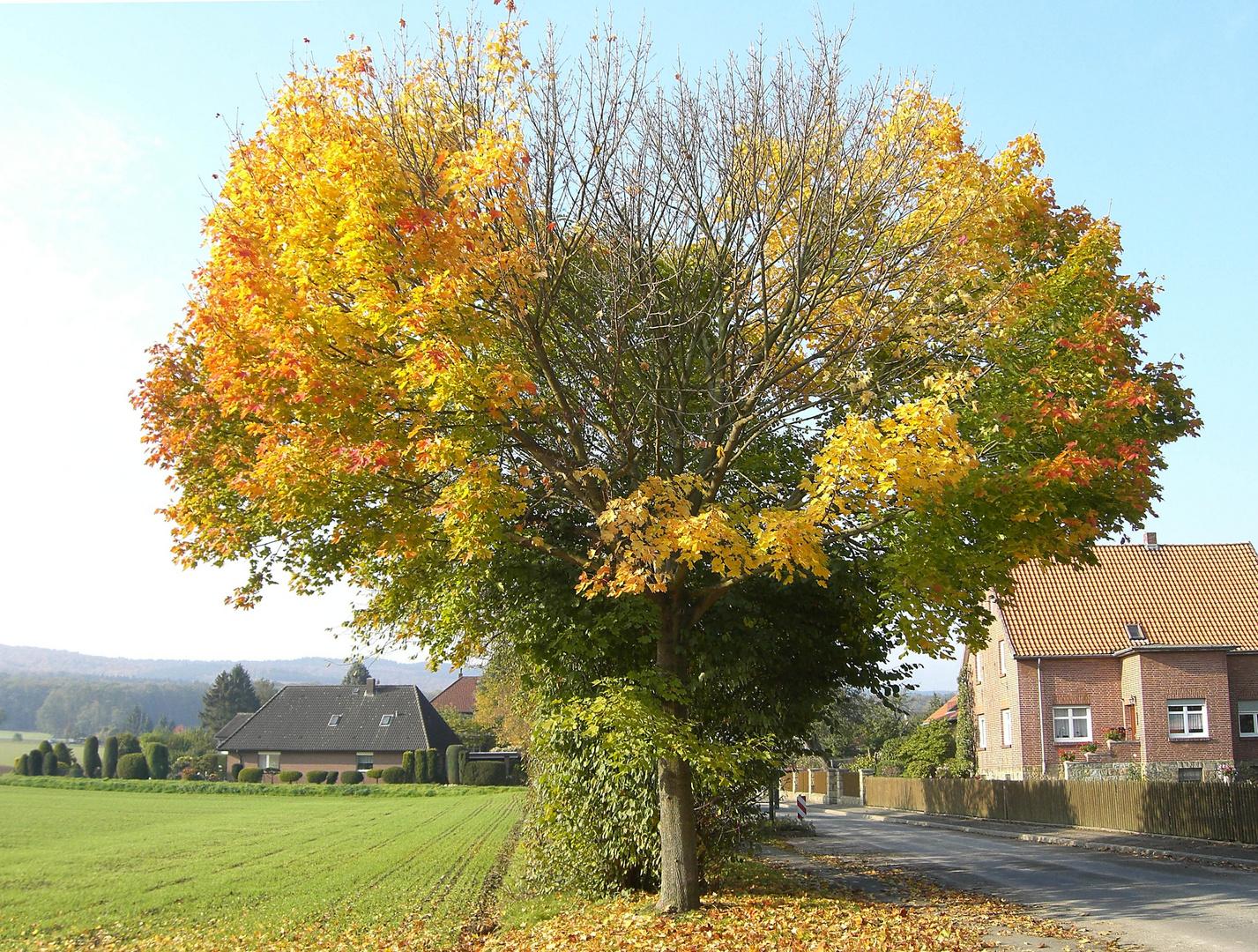 bursting-heart-tree