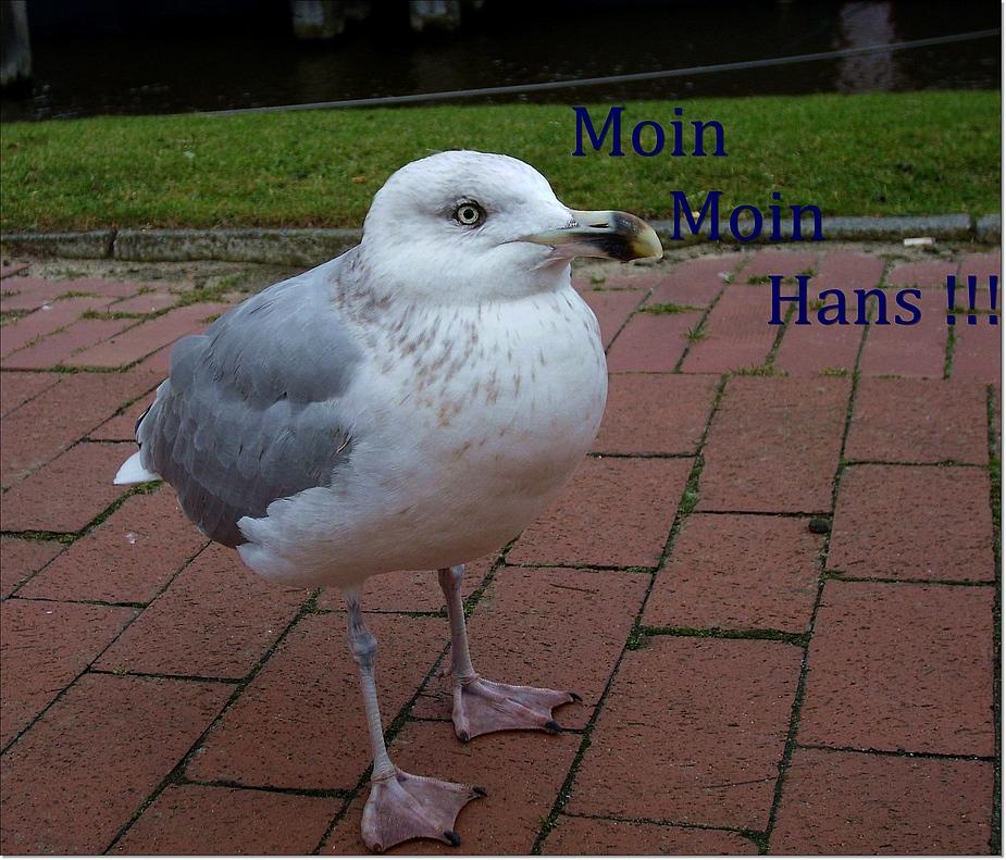 Burzelgrüße für Hans