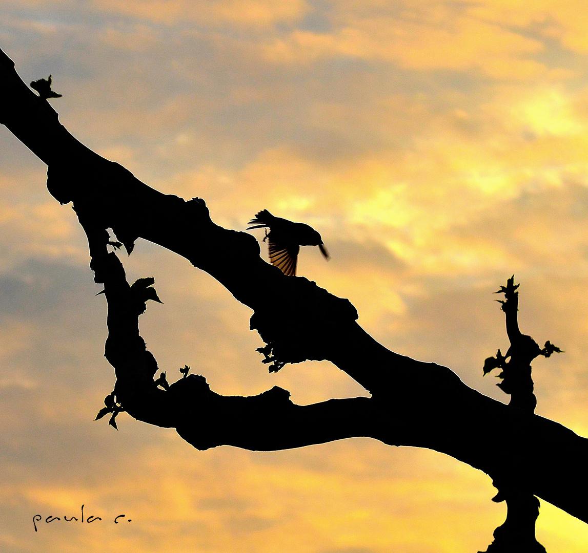 buscando la luz (dedicada a Mauro Tomassetti)