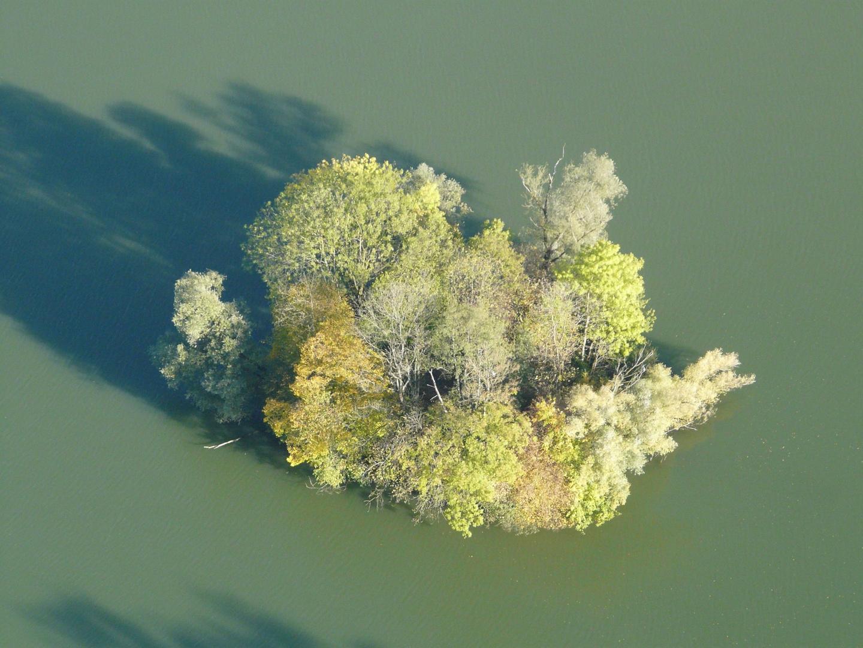 Busch im Baggersee