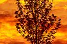 Buschfeuer von ronny aus s.