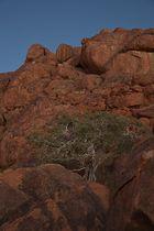 Bushmann's Baum