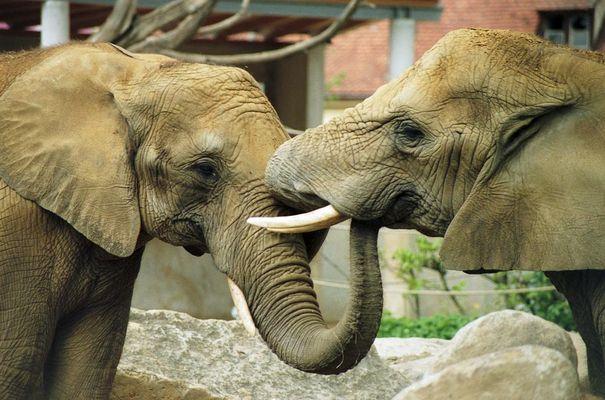 Bussi-Elefanten
