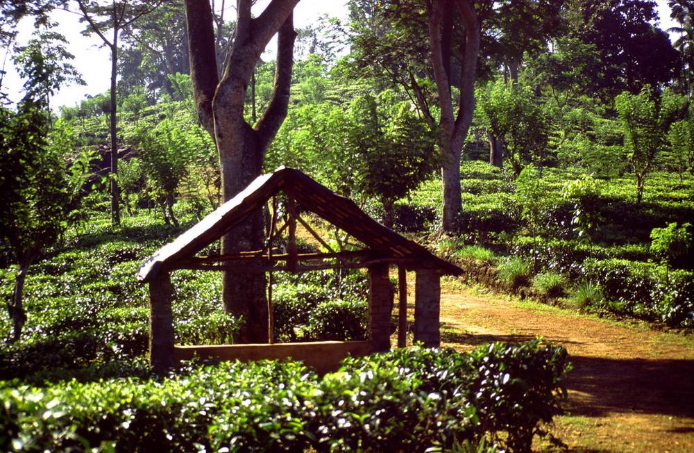 """"""" Busstop """" in den Teeplantagen, Sri Lanka"""