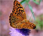Buttefly 1