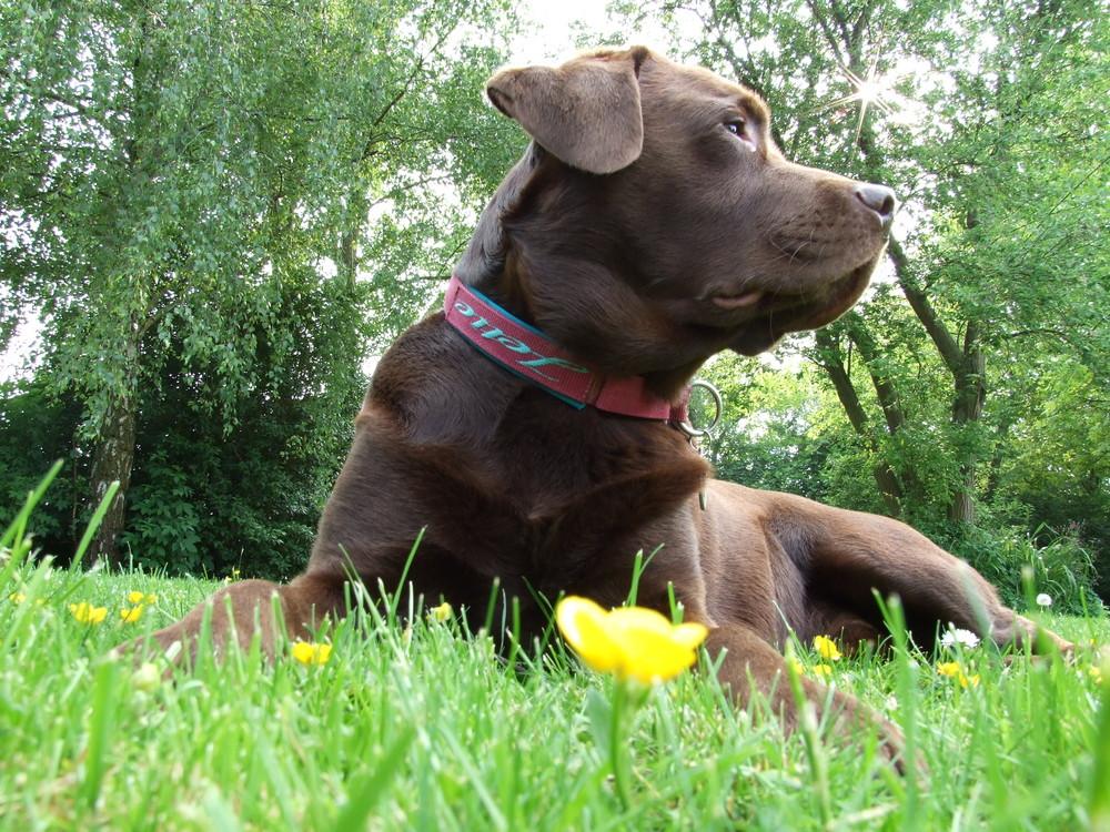 Butterblümchenwachhund