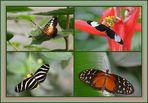 Butterflies ( III )