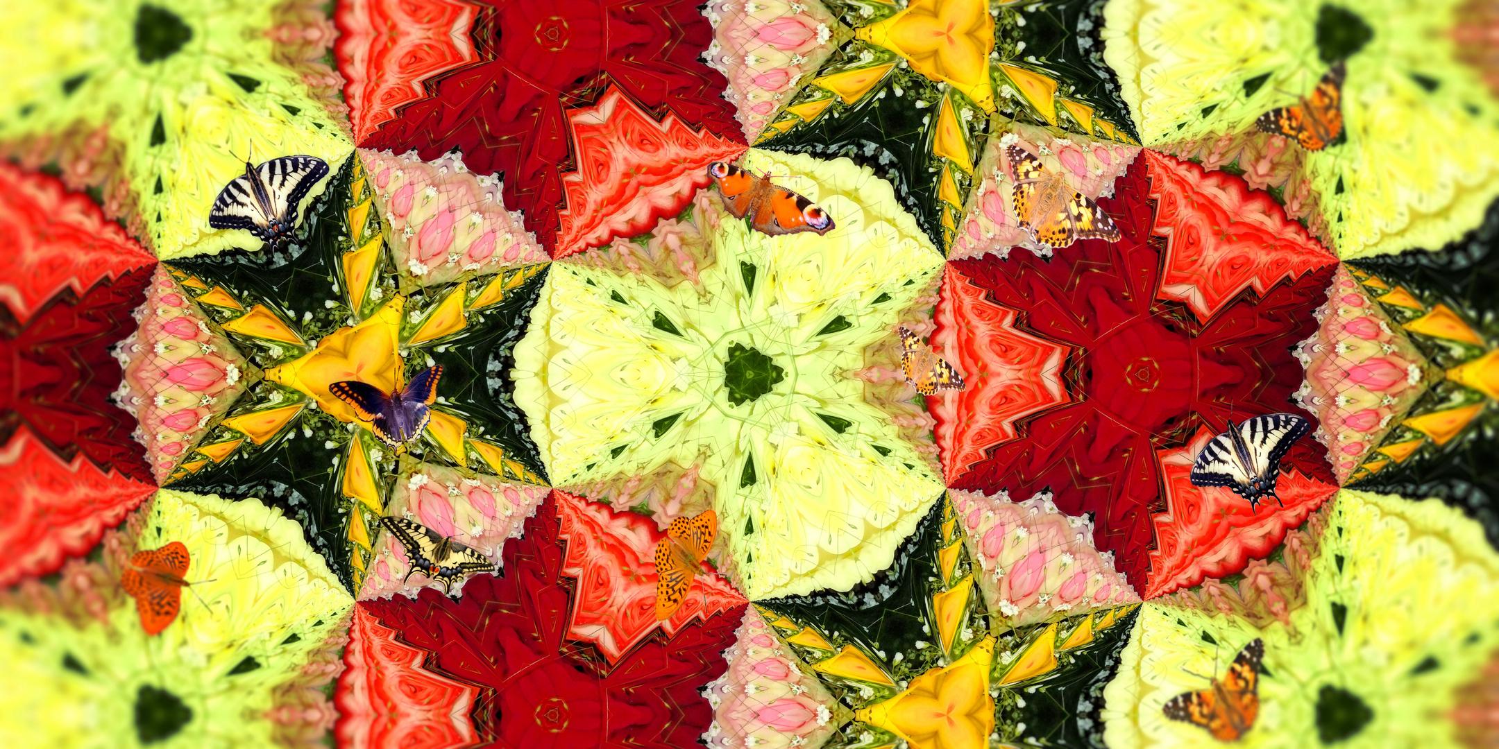 Butterflies in the Rose Garden_1