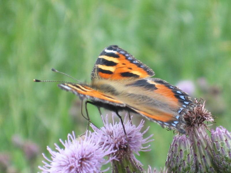 Butterflies (`|v|´)