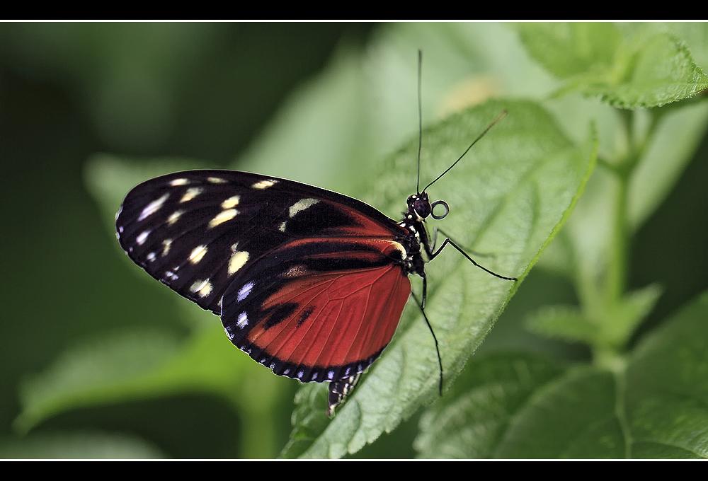 Butterfly !!