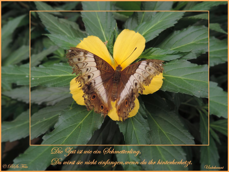 +++butterfly+++
