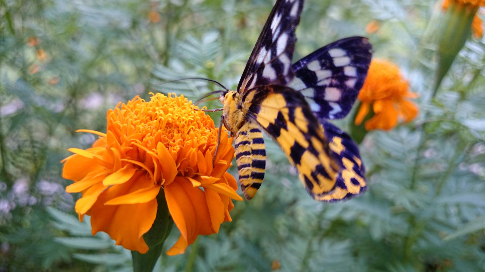 """"""" Butterfly 2 """", Ibajay - Aklan"""
