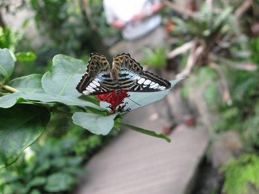 Butterfly, Butterfly ;-)