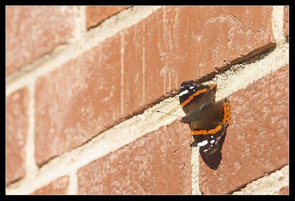 .: butterfly :.