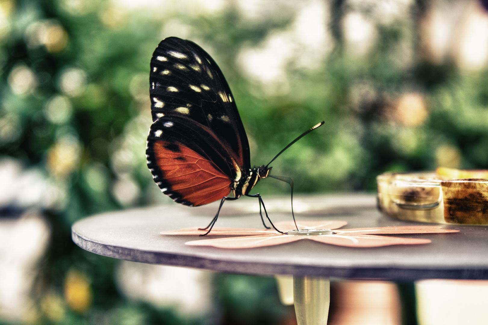 Butterfly effect.......