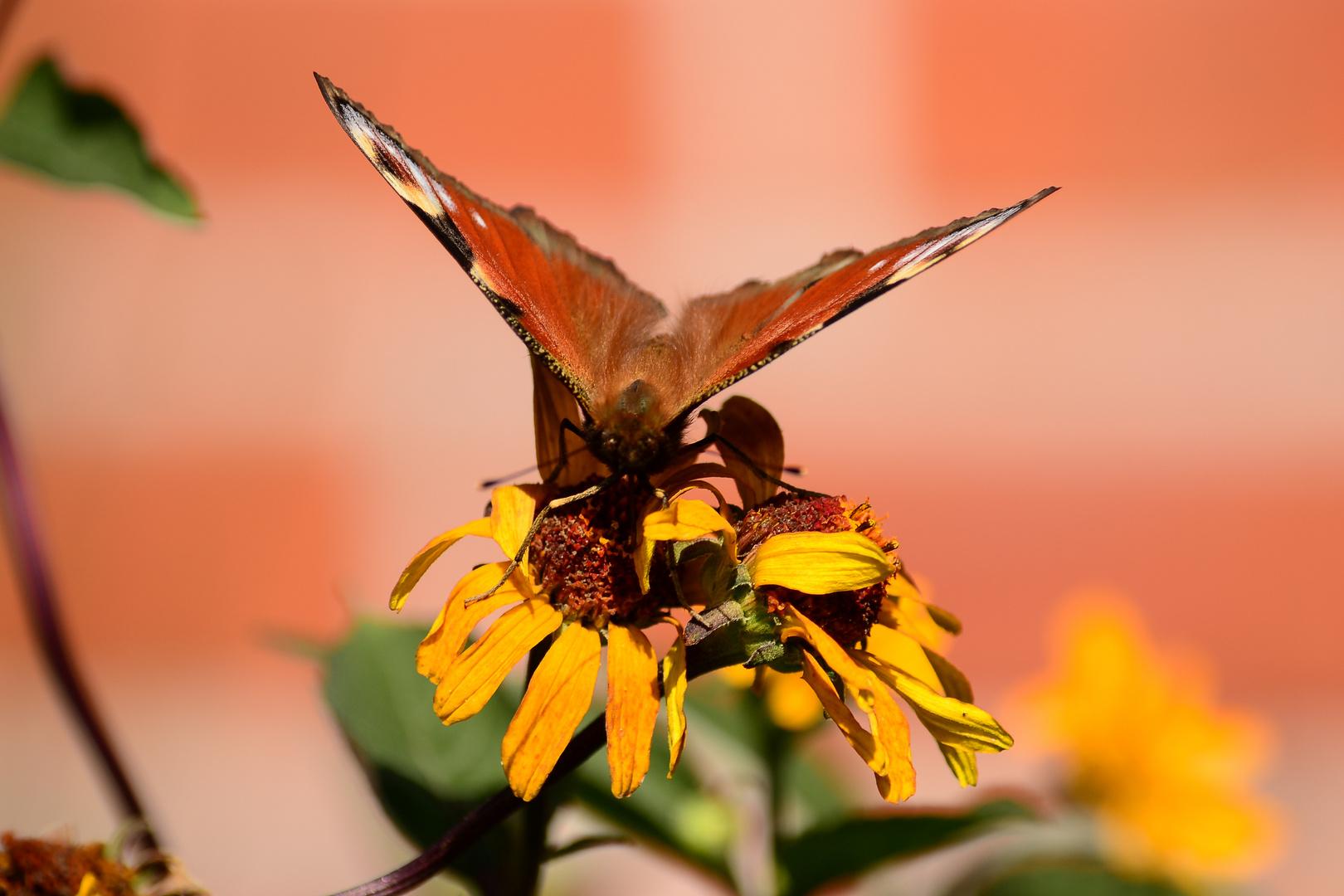 Butterfly fly away...