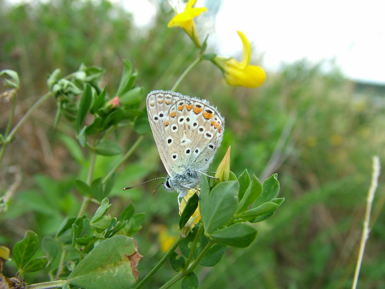 Butterfly ganz nah