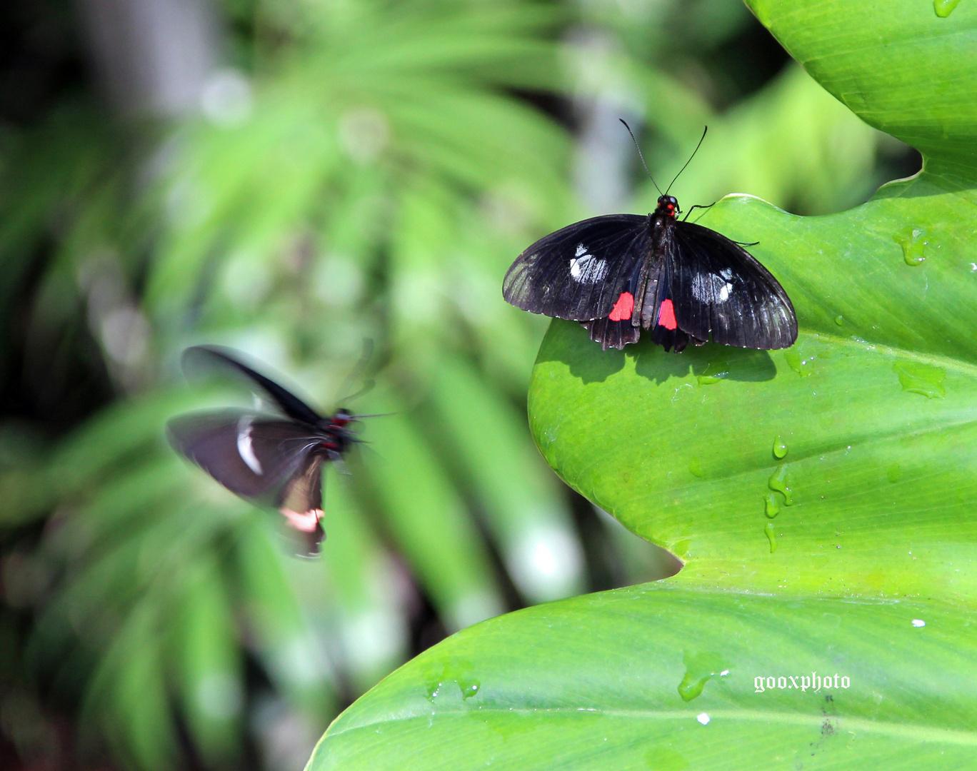 butterfly house, fairchild garden, miami