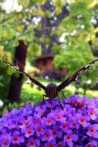 Butterfly lovin