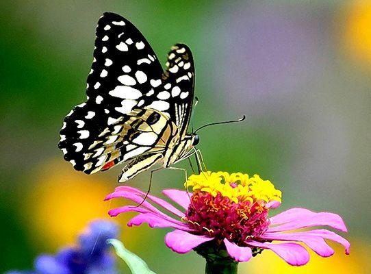 Butterfly n Flower