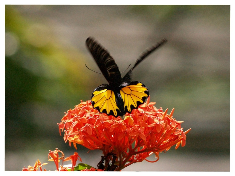 Butterfly Park, Kuala Lumpur #1
