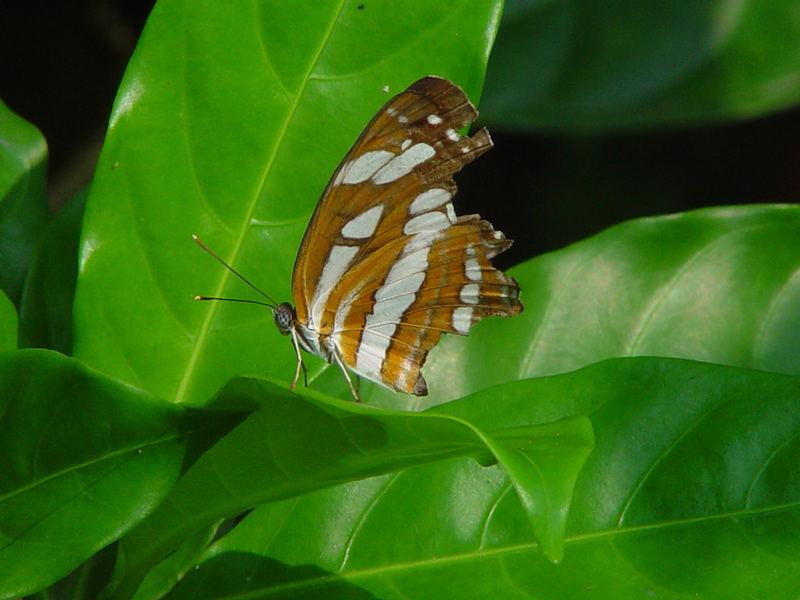 Butterfly Park - Santosa Island