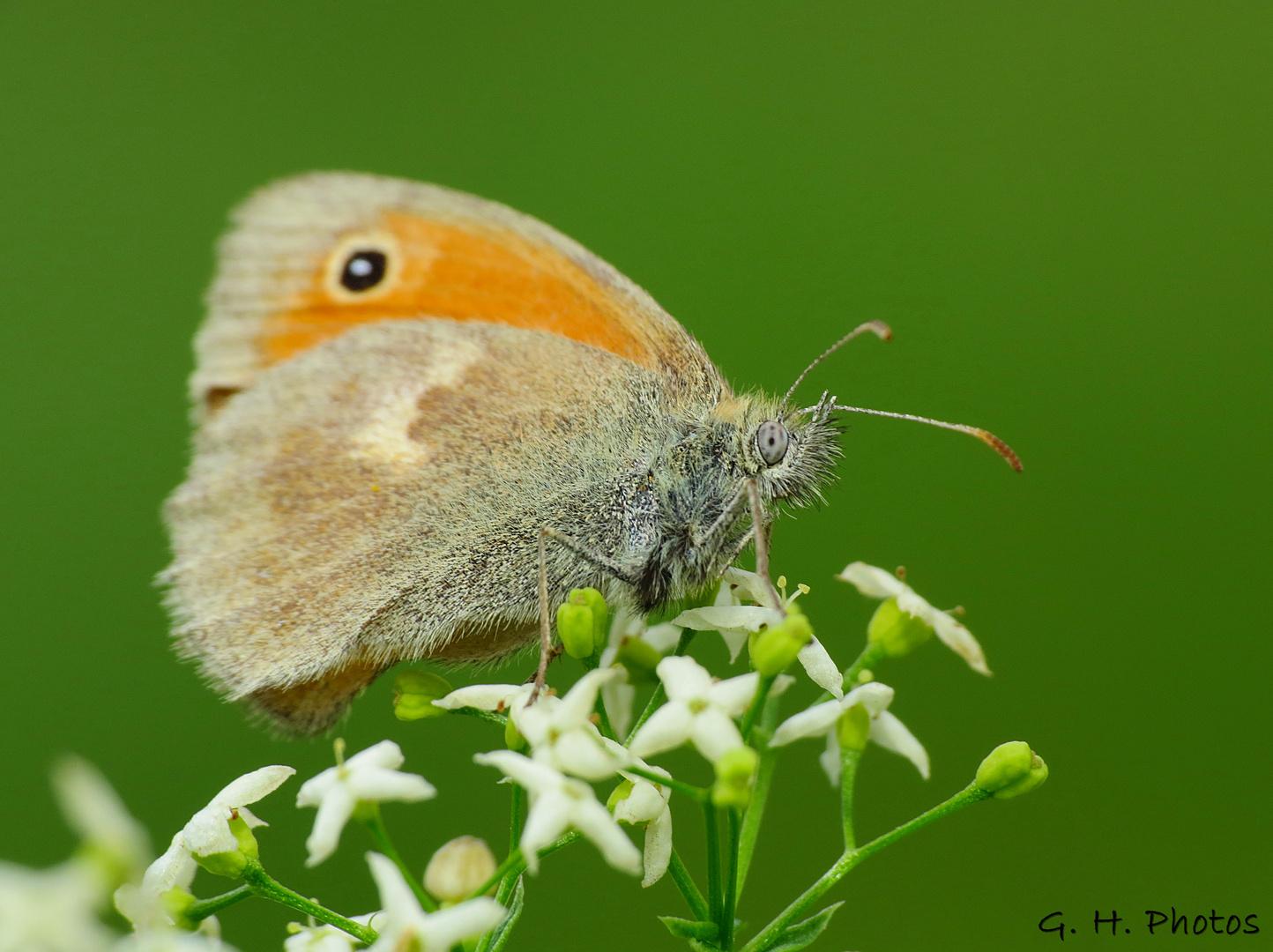 Butterfly sit on a flower