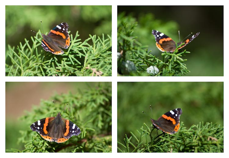 Butterfly stories 2