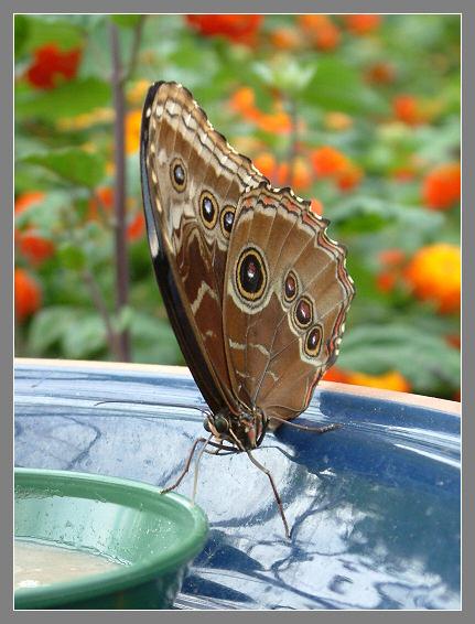 Butterflydessert