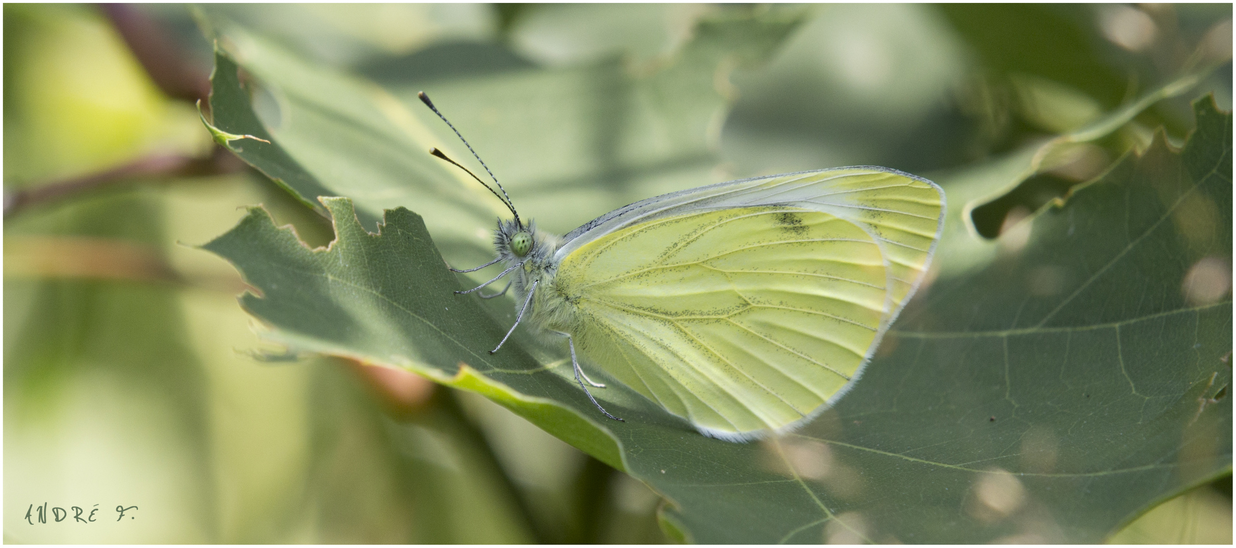 Butterfly|Effect